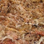 Substratos para orquídeas - Sphagnum, esfagno, musgo