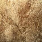Substratos (2) - Fibra de coco