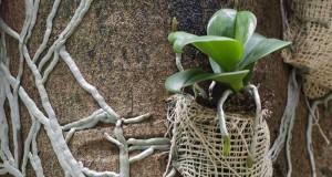 Substratos (4) – Cascas, lascas, troncos e madeiras em geral
