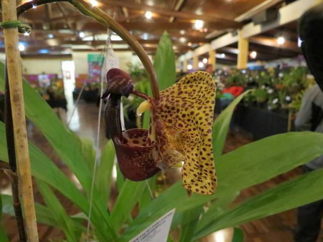 O que aprendi com as orquídeas