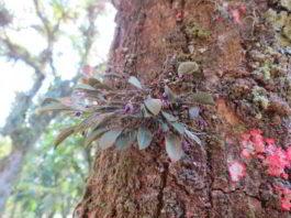 Orquídeas do mato (3) – conscientize-se