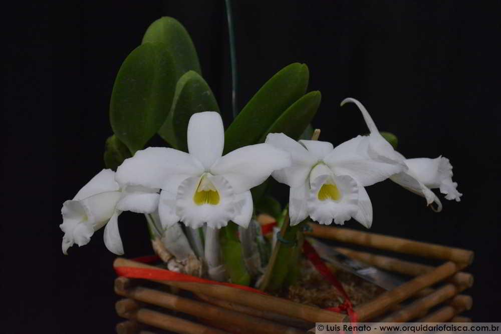 orquideas.eco.br - vasos
