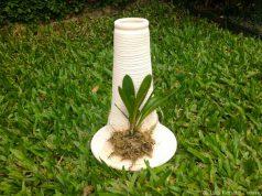 orquideas.eco.br-EcoTronco