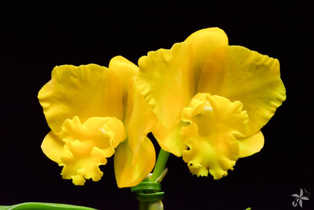 orquideas.eco.br - glossário orquidófilo