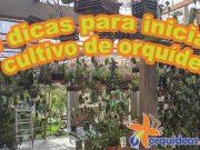 orquideas.eco.br - 10 dicas para iniciar o cultivo de orquídeas