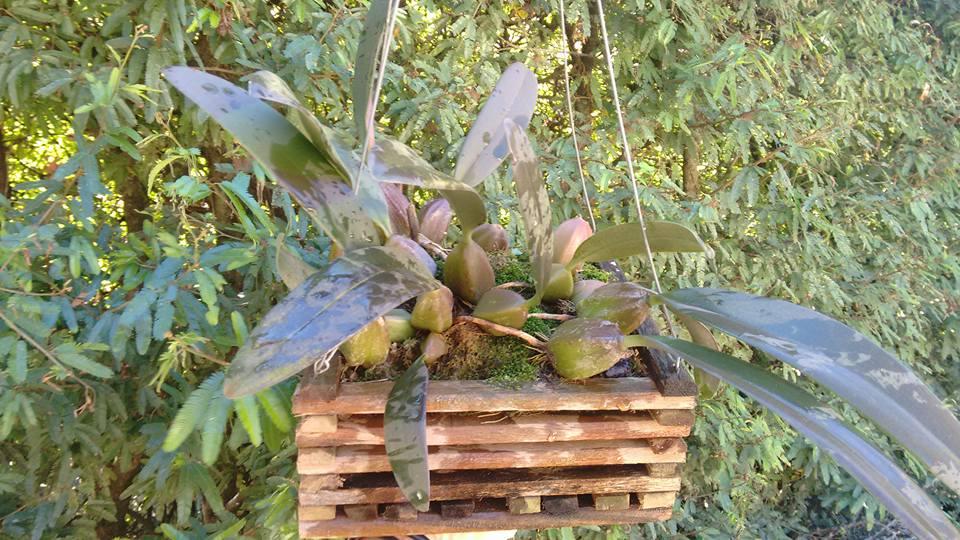 orquideas-eco-br-cachepot