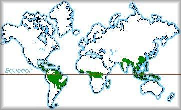 orquideas-eco-br-clima-asiatico