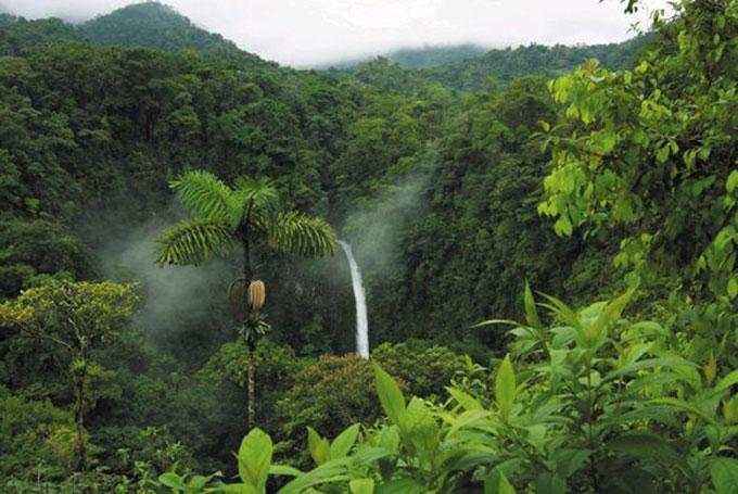 orquideas-eco-br-clima-equatorial