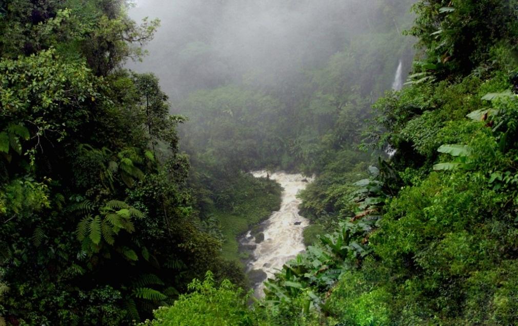 orquideas-eco-br-clima-subtropical