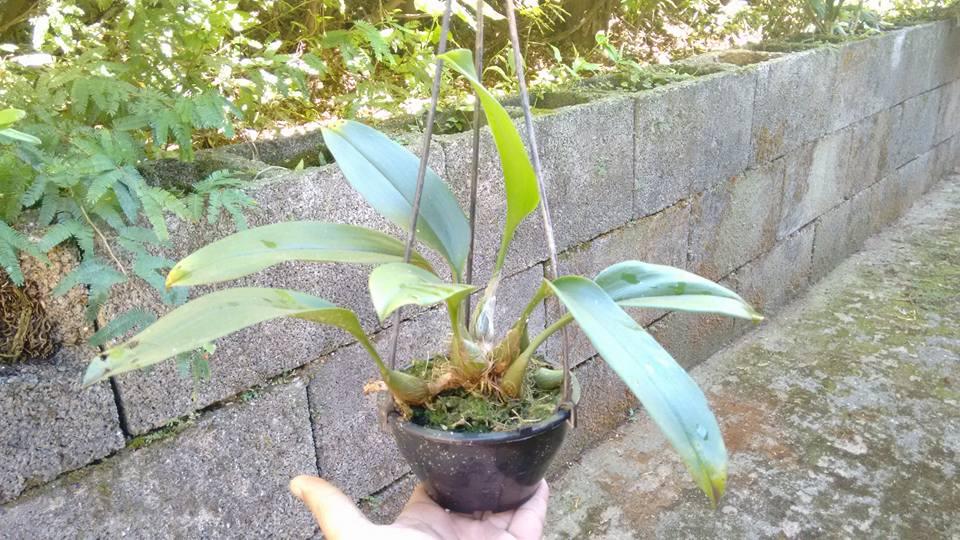 orquideas-eco-br-cuia