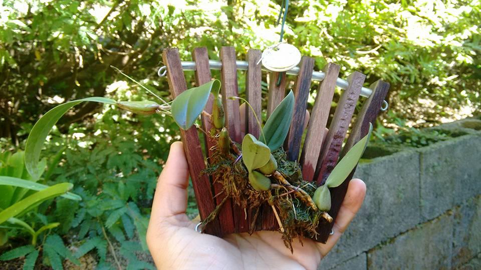 orquideas-eco-br-leque