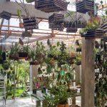 orquideas.eco.br - Última reforma