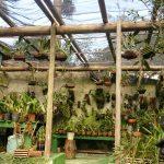 orquideas.eco.br - Terceiro orquidário