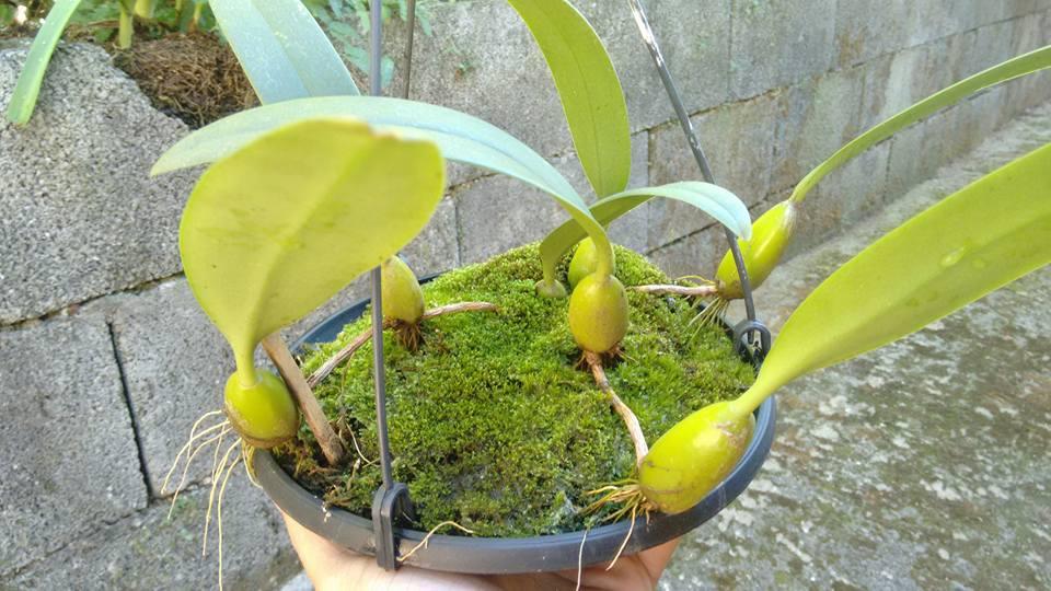orquideas-eco-br-prato