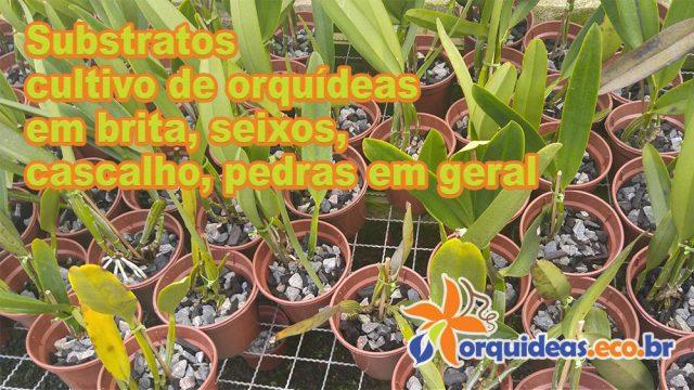 Substratos cultivo de orquídeas em brita, seixos, cascalho, pedras em geral