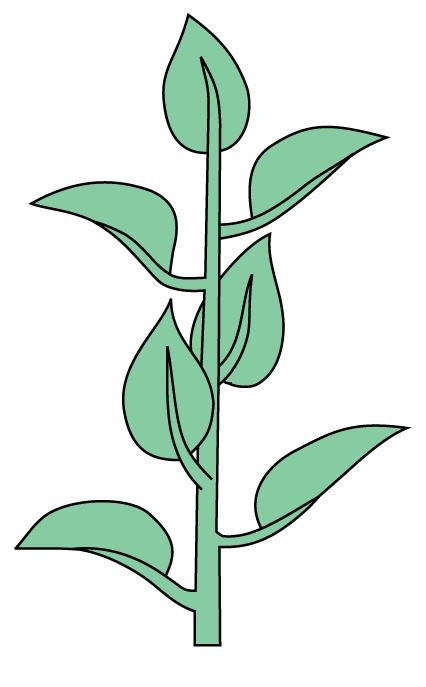 orquideas.eco_.br-filotaxia-folhas-alternadas
