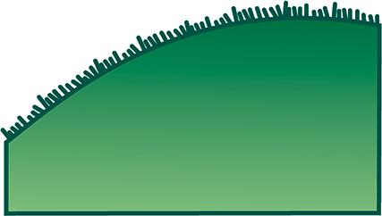orquideas-eco-br-folhas-ciliada