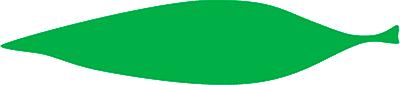 orquideas-eco-br-folhas