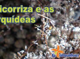 orquideas.eco.br - Micorriza e as orquídeas