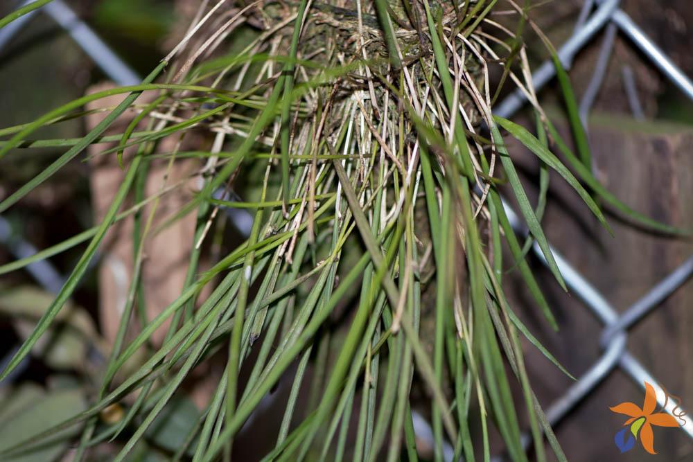 orquideas-eco-br-folhas-19