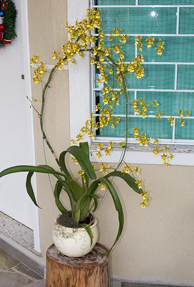 orquideas-eco-br-oncidium