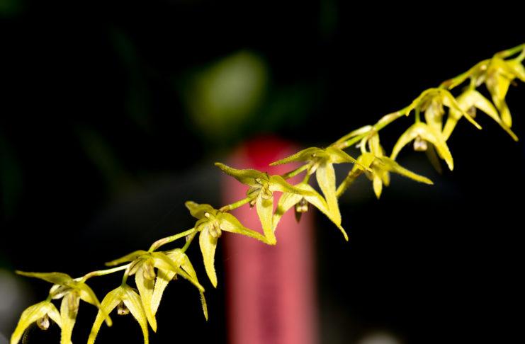 Orquídeas nas redes sociais